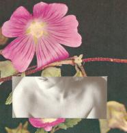 rosaflor
